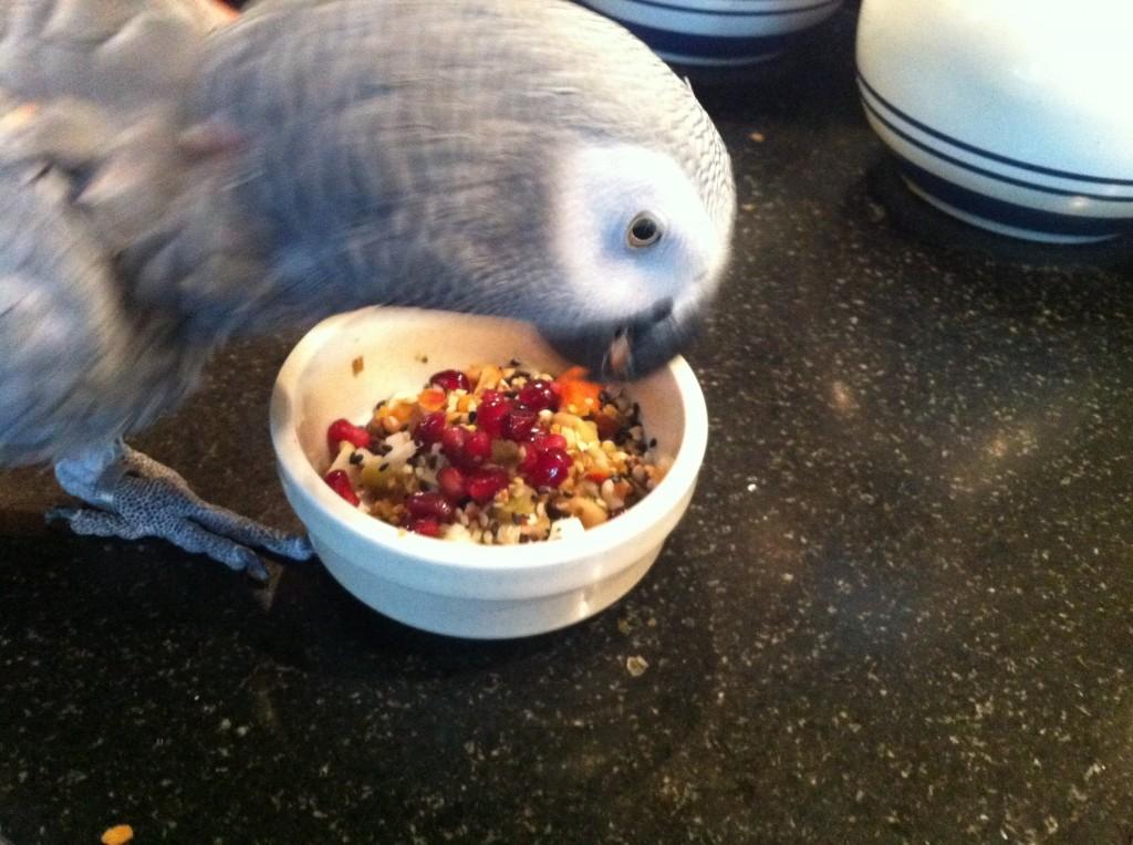 grijze roodstaart met kookpotje